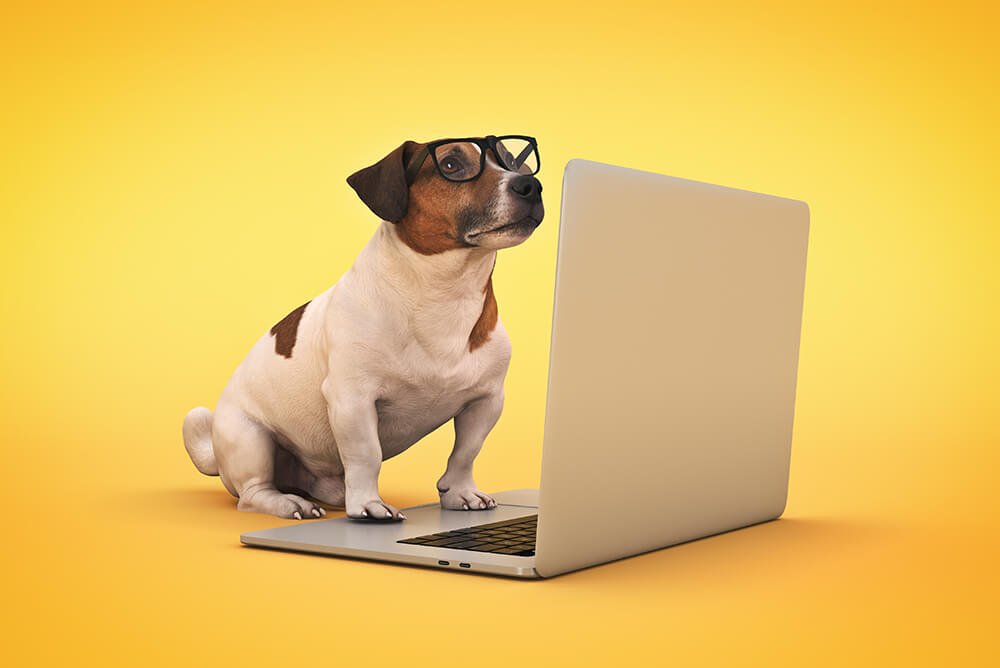 Pet Care Marketing Infographic